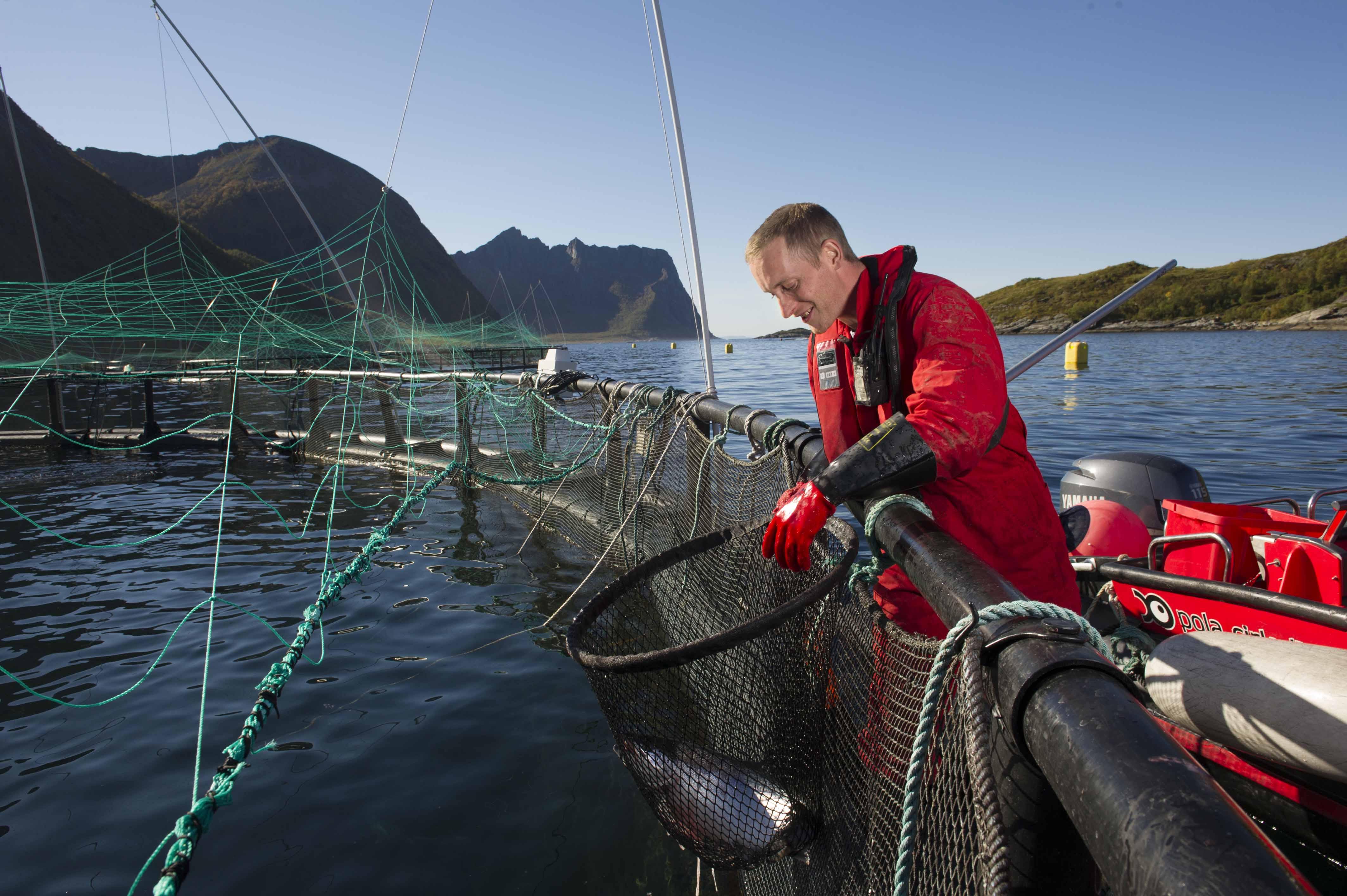 fisk jobb norge