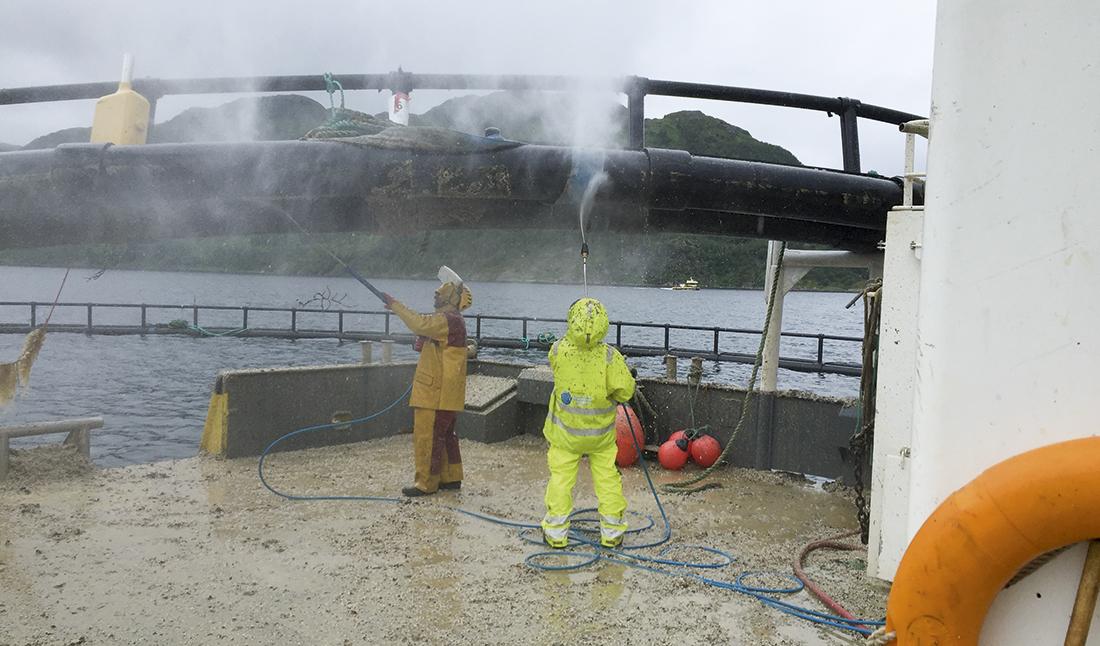 To matroser vasker en merdering. Foto: Finnsnes Dykk & Anleggservice