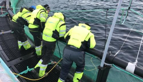 Fiskeroboten fra AquaAI studeres på merdkanten, Foto: Mørenot Robotics
