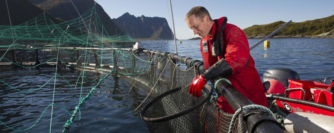 Nær 8000 personer er sysselsatt innen oppdrett av fisk og skalldyr. Bildet er fra et anlegg på Senja. Foto: Sjømat Norge