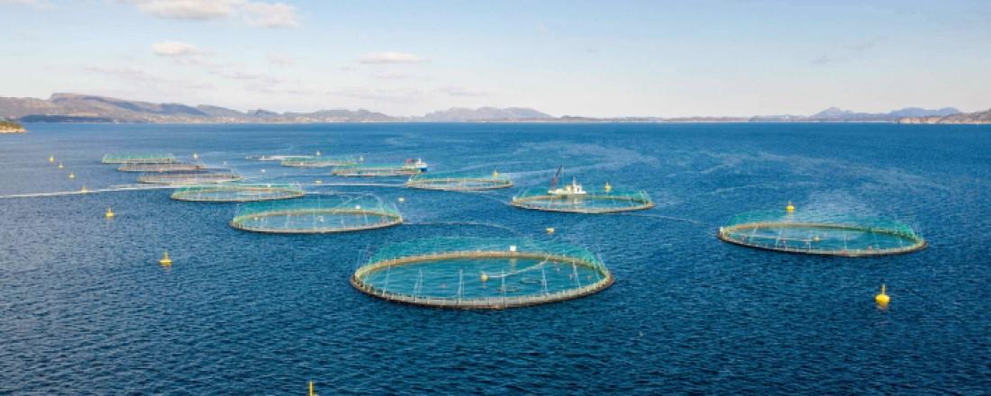 En ny standard skal sikre topp kvalitet på produkter fra Lerøy. Foto: Lerøy Seafood.