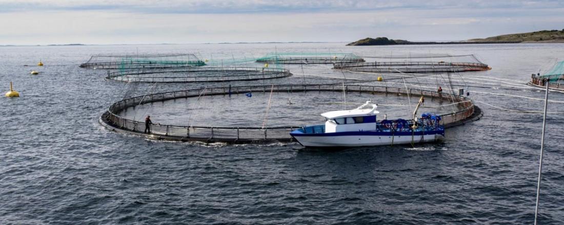 Det er nødvendig å sikre bedre samhandling, koordinering av tilsynsaktiviteter og informasjonsutveksling innen havbruksnæringen. Foto: Sjøfartsdirektoratet.