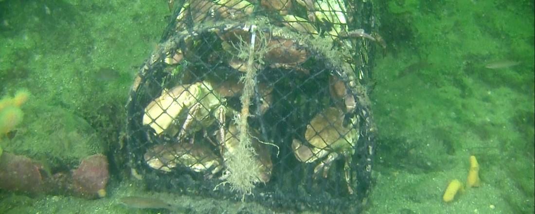 Forlatte teiner fylles med dyr som etter hvert dør og blir mat for andre dyr. (Foto: Joakim fra Askøy Sportsdykkerklubb)