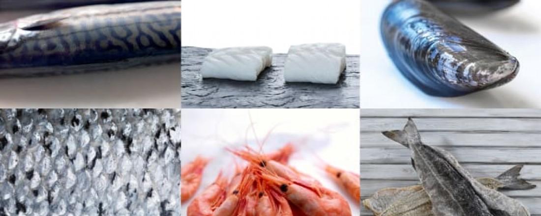Montasje: Norges sjømatråd