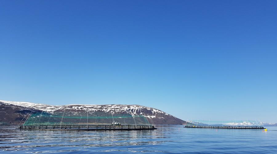 ABB elektrifiserer arbeidsbåt for en av verdens første oppdrettsanlegg for torsk. Illustrasjon: Norcod.