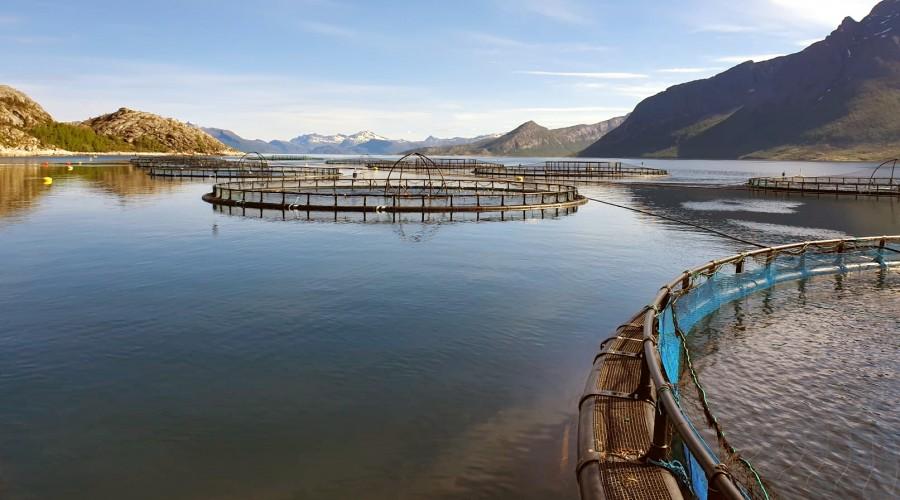 Cermaq forplikter seg  til FNs klimamål om å holde seg godt under 2 grader temperaturøkning. Foto: Cermaq.